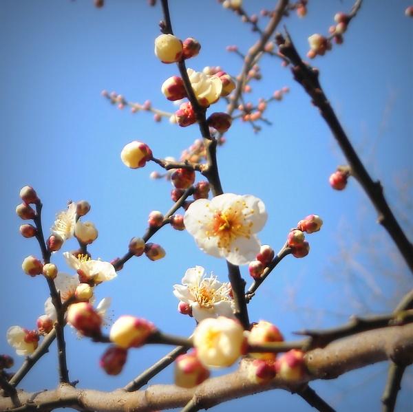 早春・冬枯れ散歩道_c0141013_003718.jpg