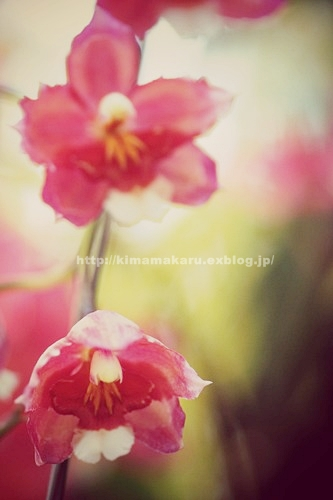 パステル調の早春賦_a0229217_16533549.jpg