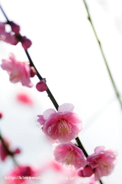 梅の便りの早春賦_a0229217_217354.jpg