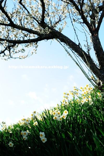 梅の便りの早春賦_a0229217_2185743.jpg