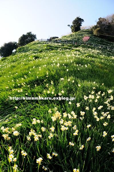 梅の便りの早春賦_a0229217_2191617.jpg