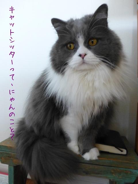 動物取扱業の申請_e0237625_13123857.jpg