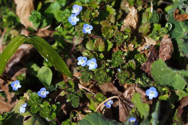 ようやく春本番?花いっぱい _f0214527_10452456.jpg
