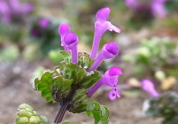 ようやく春本番?花いっぱい _f0214527_10462040.jpg