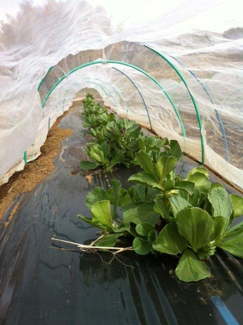 1年半寝かした・・自家製堆肥をユンボで切り返し畑へ_c0222448_12402284.jpg