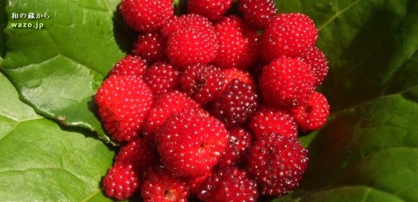 野苺の季節_f0258061_225371.jpg