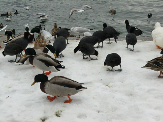 冬の風景_f0226671_553018.jpg