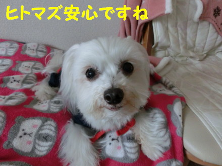 b0193480_14263499.jpg