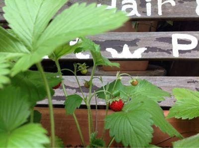 gardening_a0059281_14184247.jpg