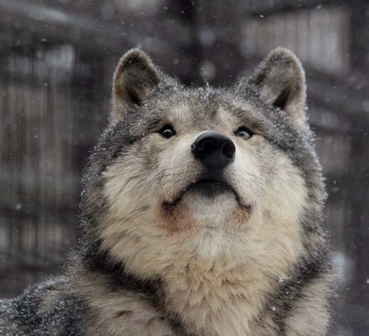 雪とルーク_c0155902_1814457.jpg