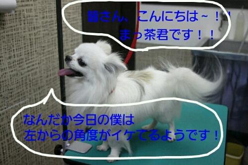 b0130018_2238345.jpg