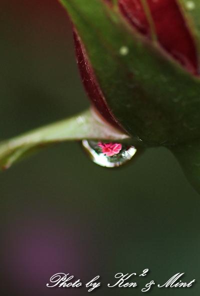 雨の次の日は公園にGO!_e0218518_22284632.jpg