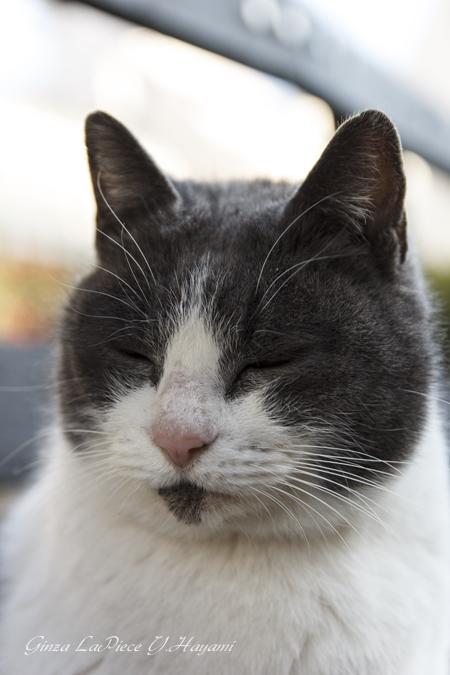 猫のいる風景 門仲の猫 お地蔵様か!_b0133053_07839.jpg
