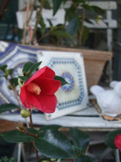 オークリーフ(赤い花)_f0049672_12201763.jpg
