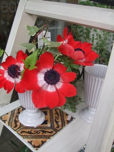 オークリーフ(赤い花)_f0049672_12222498.jpg