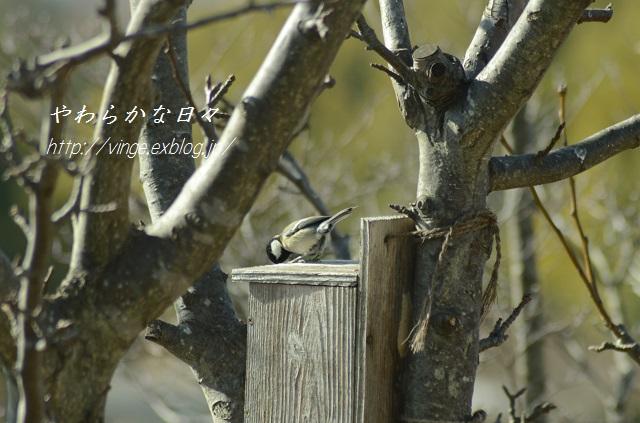 春近し_a0158478_22362554.jpg
