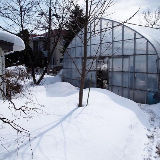 3月2日のお庭の様子_a0292194_12242437.jpg