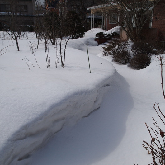 3月2日のお庭の様子_a0292194_12245661.jpg