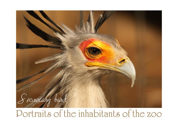 ヘビクイワシ:Secretary bird_b0249597_13272124.jpg