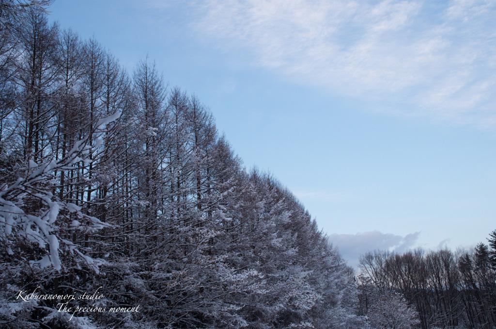 寒い日が続いてますが_c0137403_16482212.jpg