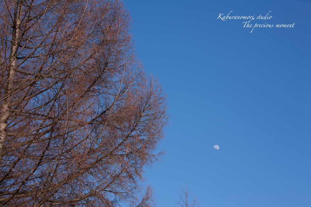 寒い日が続いてますが_c0137403_16532819.jpg
