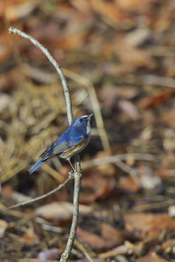 地元の鳥_e0268015_1025581.jpg