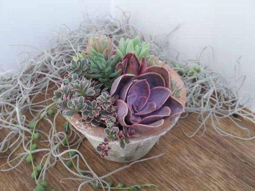 季色tokiiroさんのタニク植物_f0224568_18464598.jpg