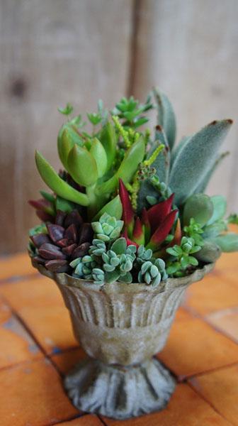 季色tokiiroさんのタニク植物_f0224568_18472899.jpg