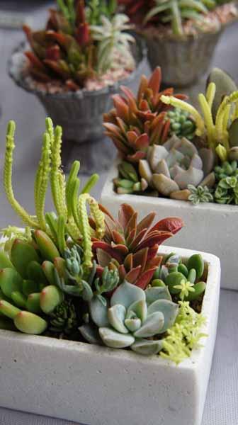 季色tokiiroさんのタニク植物_f0224568_1847648.jpg