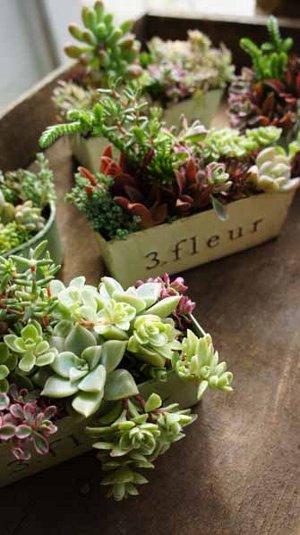 季色tokiiroさんのタニク植物_f0224568_1848143.jpg