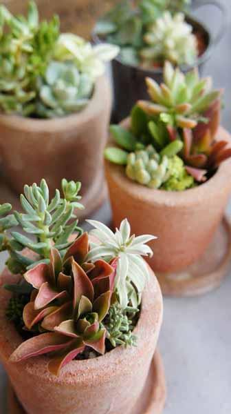 季色tokiiroさんのタニク植物_f0224568_18484282.jpg