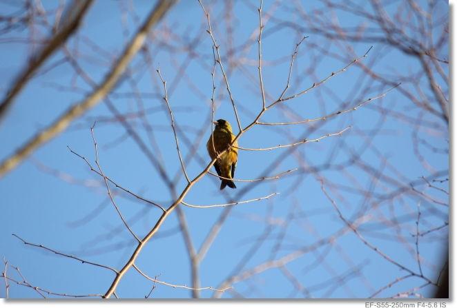 鳥さん_c0054876_17222040.jpg