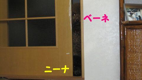 c0283778_19111646.jpg