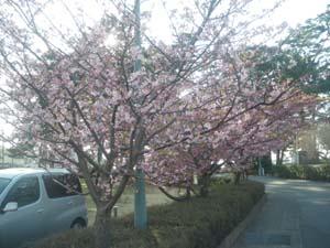 春ですね〜〜〜?!_b0084194_13462034.jpg