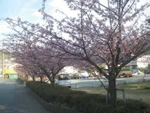 春ですね〜〜〜?!_b0084194_1350395.jpg