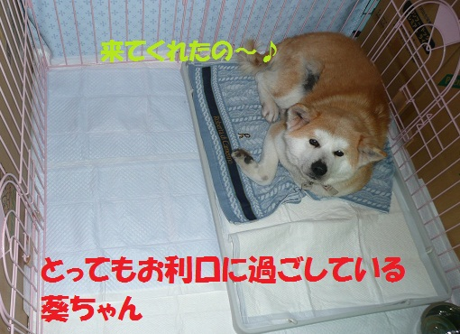 f0121712_832638.jpg