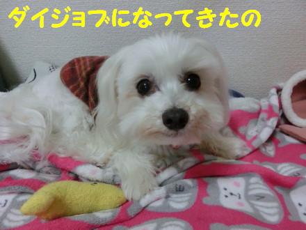 b0193480_15275990.jpg