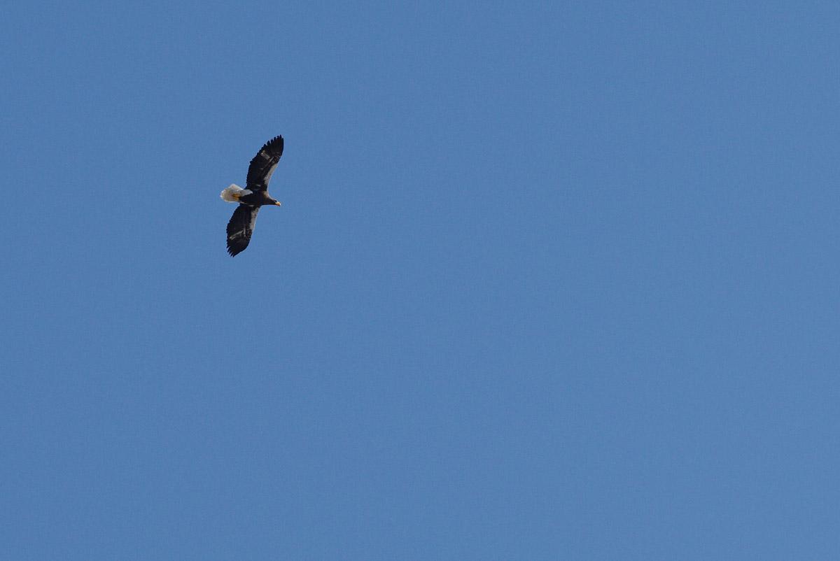 鳥見んぐ        道東シリーズ 10_b0103798_22342858.jpg