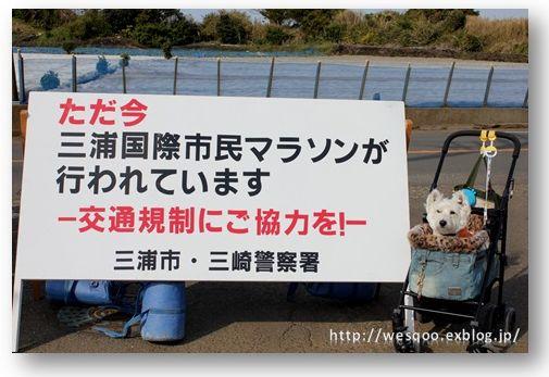 三浦国際市民マラソン_a0161111_2333820.jpg