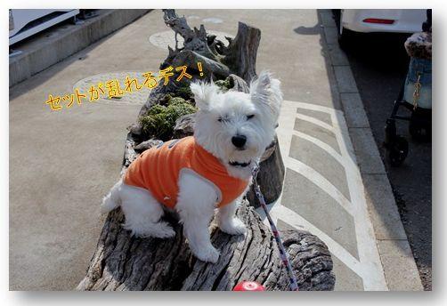 三浦国際市民マラソン_a0161111_23355997.jpg