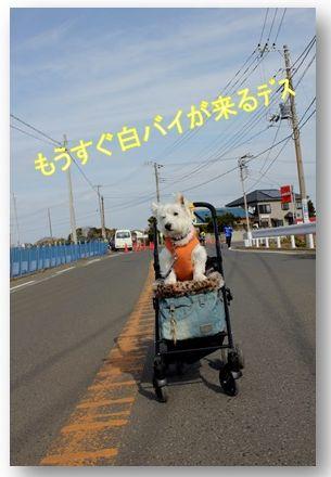 三浦国際市民マラソン_a0161111_23431688.jpg