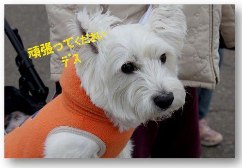 三浦国際市民マラソン_a0161111_2351282.jpg