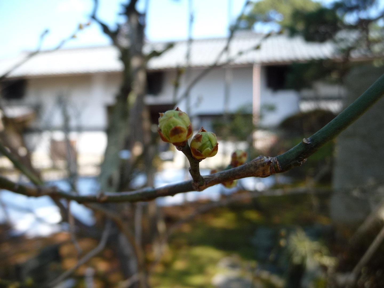 ~ 春へ ~_e0135219_1522689.jpg