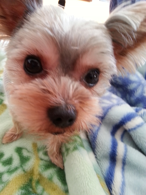 わが家の愛犬_b0251421_16192779.jpg