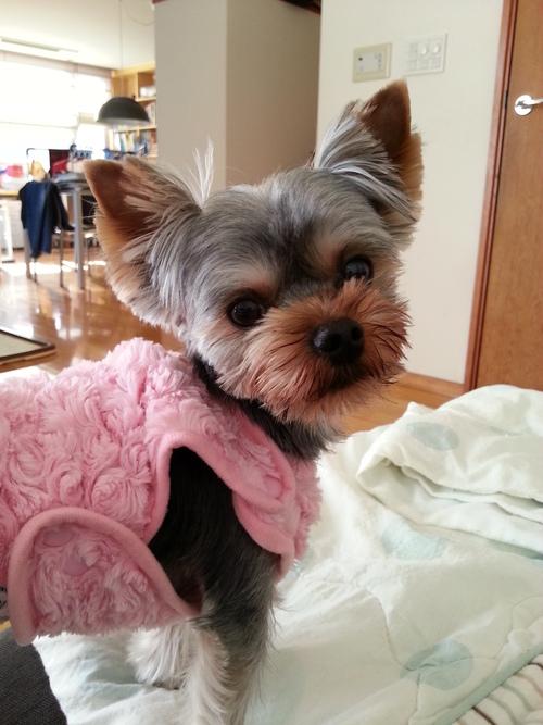 わが家の愛犬_b0251421_16194485.jpg