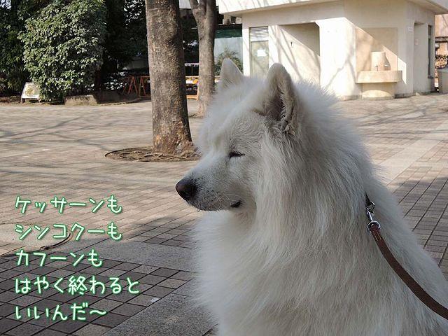 やけっぱち_c0062832_4231836.jpg