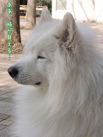 やけっぱち_c0062832_4232226.jpg