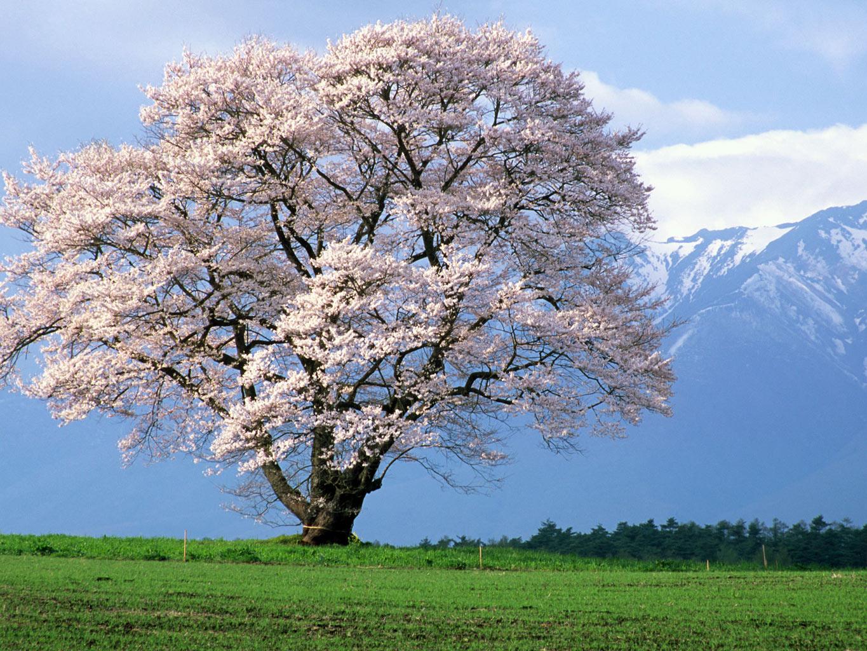 春のお知らせ3つ_a0212145_1052517.jpg