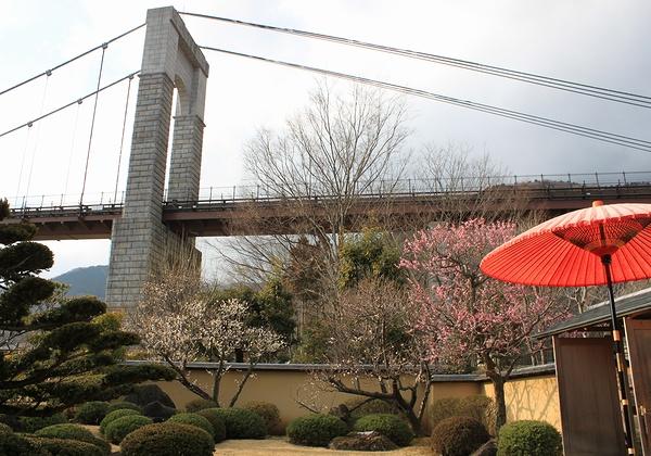 秦野戸川公園と香雲寺の梅の見ごろがもうすぐだよ_c0171849_18192674.jpg