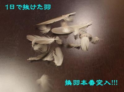 b0158061_2134052.jpg